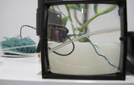 <p>Gestation Period (SFAI 2013)</p>