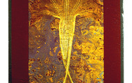 """<p><strong>BLIND</strong>  2000  10.75"""" x 8.5""""</p>"""