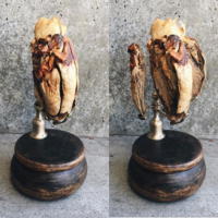 "<p style=""text-align: center;""><strong>Plastinated donkey heart</strong></p>